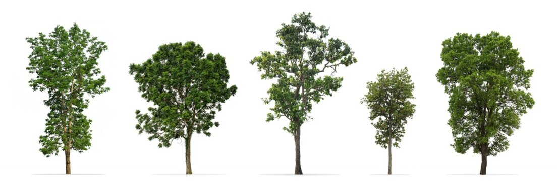 Collection of trees isolated on white background