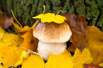 mushrooms growing in the autumn season