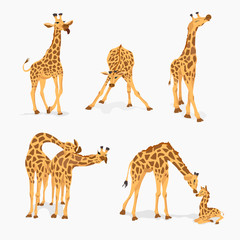 Set of cute giraffes isolated on white.