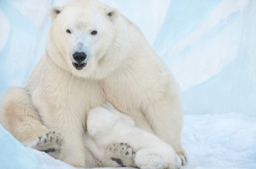 Медведица кормит медвежонка.