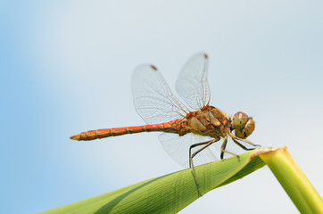 Dragonfly sitting on the stem of the plant.