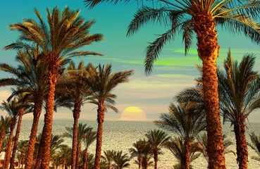 Sunset on the shore of the Red Sea. Sinai. Egypt. Sharm el Sheikh. Photo Collage