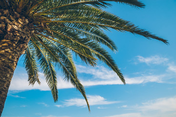 palm tree with blue sky on background