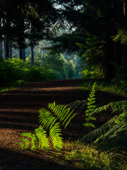Nature and landscapes photography new forest UK