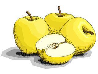 Vector illustration of drawing fruit yellow apples.