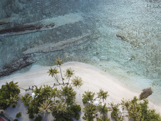 Aerial view of palm trees growing at beach
