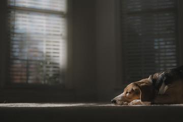Dog sleeping on rug at home