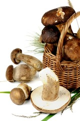 Raw Boletus Mushrooms