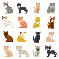 Funny cats in flat style. Isolate on white background