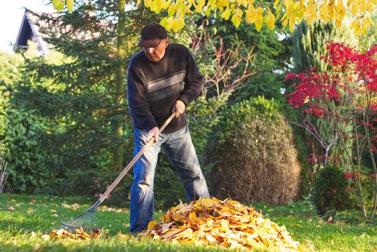 Senior man raking fallen leaves in garden at autumn
