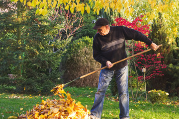 Gardener raking fallen leaves in garden at autumn