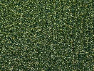 Soybean field aerial top down view