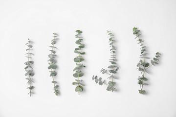 Fresh eucalyptus leaves on white background, top view