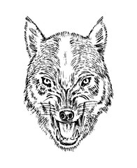 Portrait of wolf. Head and of a wild animal. Angry roar of a predator. Dog face. Badge or emblem Vector illustration. Engraved hand drawn old monochrome Vintage sketch.