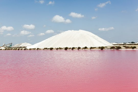 Salt marshes in Aigues Mortes, France