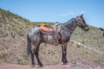 Beautiful horse at Real de Catorce desert in San Luis Potosi, Mexico