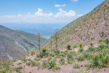 Beautiful cactus landscape at Real de Catorce desert in San Luis Potosi, Mexico
