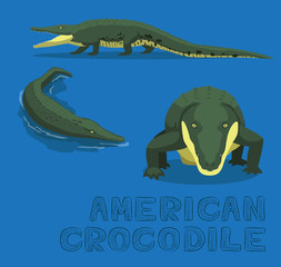 American Crocodile Cartoon Vector Illustration