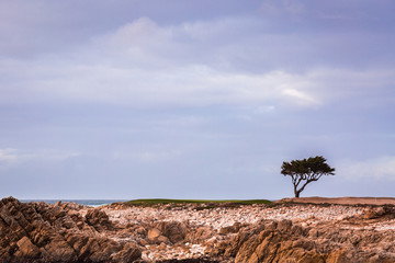 Lonely tree on a rocky coastline with a cloudy sky