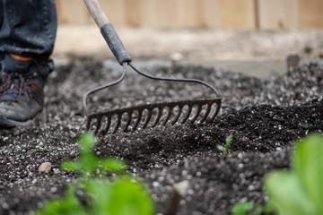 Raking rows for planting a garden
