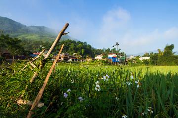 meadow in Vietnam