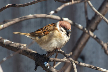 A sparrow on a bare branch of a tree