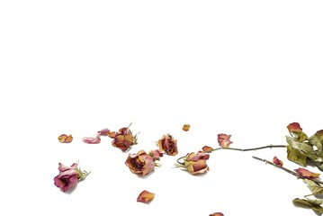 Top view of dried red rose and leaf on white background
