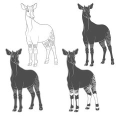 Set of black and white images with okapi. Isolated vector objects on white background.