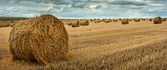 Fototapeta view of hay bales on the field after harvest obraz