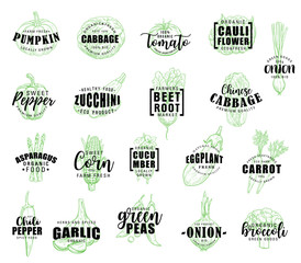 Vegetable hand drawn lettering with veggies sketch