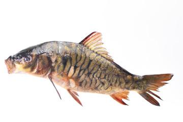 Fish carp