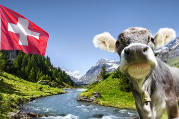 Kuh in den Schweizer Bergen
