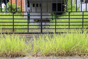 Grass and weed side fence at rainy season.