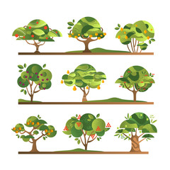Different fruit trees set, apple, orange, lemon, pear, rowan, apricot, plum, cherry tree with ripe fruits vector Illustrations on a white background