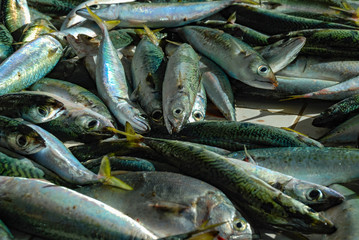 Fresh fish caught in Rio de Janeiro, fishmongers in Copacabana