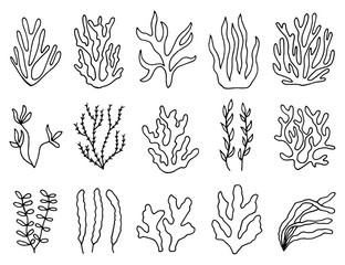 seaweed outline in isolation. linear drawing set of objects