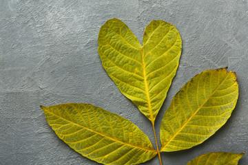 Autumn season background, green ash leaf
