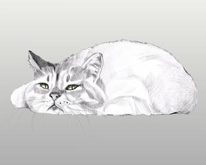 Liegende Katze weis auf grauen Hintergrund.