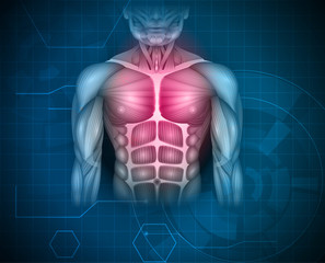 Muscles of the human body, abdomen, chest and arms, beautiful colorful illustration on an abstract blue background.