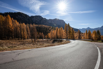 Road in the autumnal forest. Fall colors alpine landscape