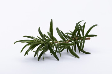Rosemary branch isolated on white background