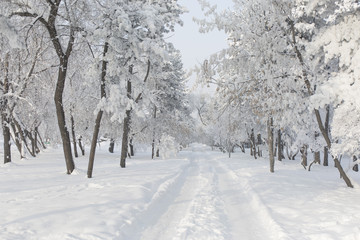 Winter forest with trees covered snow. White frost park landscape.