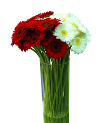 bouquet of red and white gerberas isolated on white background