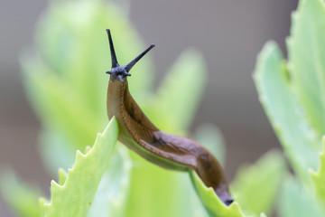 Gros-plan de limace