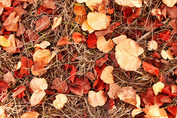 autumn leaves on the ground. fall wallpaper. toned image.