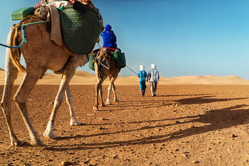 Berber nomads walking with a camel in the desert