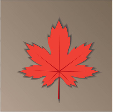 red autumn maple leaf on a gray background