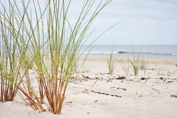 Plaża i nadmorska trawa - fototapety na wymiar
