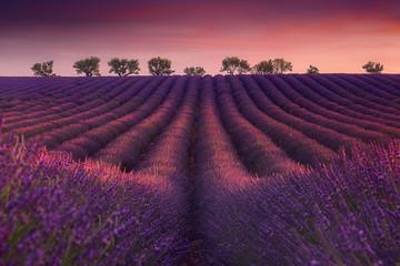 Photo sur Aluminium Grenat Coucher de soleil typique sur un paysage de perspective de champ de lavande en Provence.