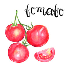 Tomato watercolor illustration with lettering